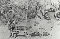 Harris children and dog cart
