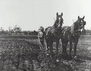 Ploughing, Glenbrook (?)